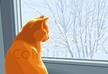 Kenny o gato que caiu da janela